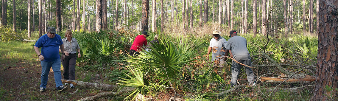 students working in pine forest